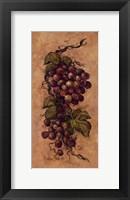 Framed Vintage Grapevine ll