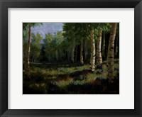 Framed Aspen Meadow