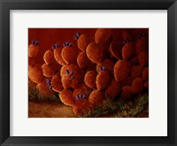 Framed Orange Prickly Pear