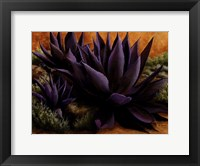 Framed Purple Agaves On The Rocks