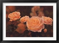 Framed Mandarin Heirloom Roses