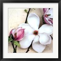 Framed Magnolia Diva I