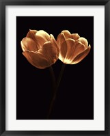 Illuminated Tulips II Framed Print