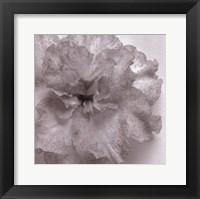 Framed Blossom [One]