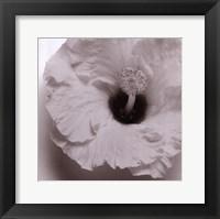 Framed Blossom [Four]