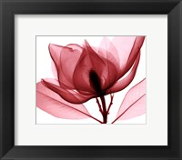 Framed Red Magnolia I (Sm.)