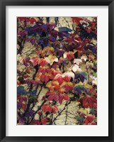 Variegation of the Vines I Framed Print