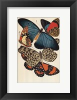 Collection II Framed Print
