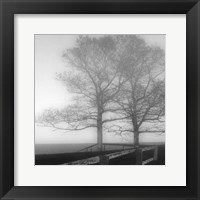Framed Seaside Tree