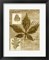 Framed Leaf Collage III
