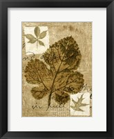Framed Leaf Collage IV
