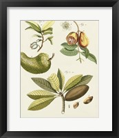 Framed Breadfruit