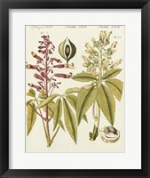 Framed Yellow Buckeye
