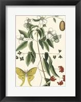 Framed Butterfly and Botanical III