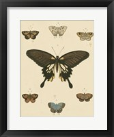 Framed Heirloom Butterflies I