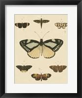Framed Heirloom Butterflies II