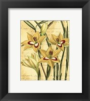 Framed French Gladiola