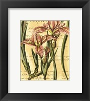 Framed French Iris