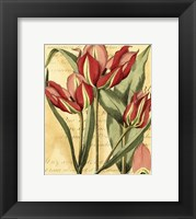 Framed French Tulip
