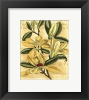 Framed French Magnolia