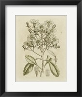Framed Tinted Botanical I