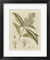 Framed Tinted Botanical II