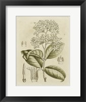Framed Tinted Botanical III