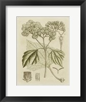 Framed Tinted Botanical IV