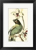 Framed Cuvier Exotic Birds III
