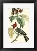 Framed Cuvier Exotic Birds VI
