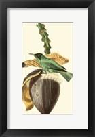 Framed Cuvier Exotic Birds VIII