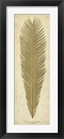 Framed Sago Palm I