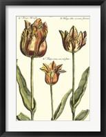 Framed De Passe Tulipa I
