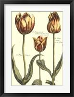 Framed De Passe Tulipa II