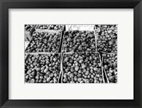 Farmer's Market VI Framed Print