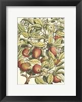 Framed Apple Tree Branch