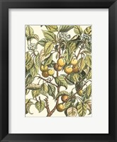 Framed Apricot Tree Branch