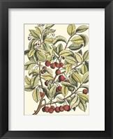Framed Cherry Tree Branch