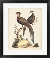 Framed Regal Pheasants II