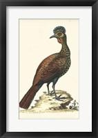 Framed Regal Pheasants V
