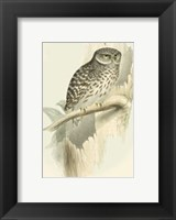 Framed Sparrow Owl