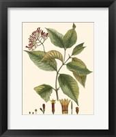 Framed Crimson Botanical I
