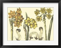 Framed Narcissus in Bloom I