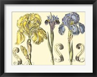 Framed Iris in Bloom I