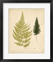Framed Cottage Ferns I