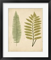 Framed Cottage Ferns II