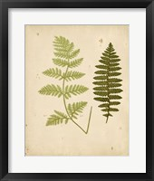 Framed Cottage Ferns III