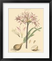 Framed Blushing Pink Florals II