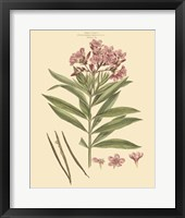 Framed Blushing Pink Florals III