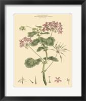 Framed Blushing Pink Florals IV